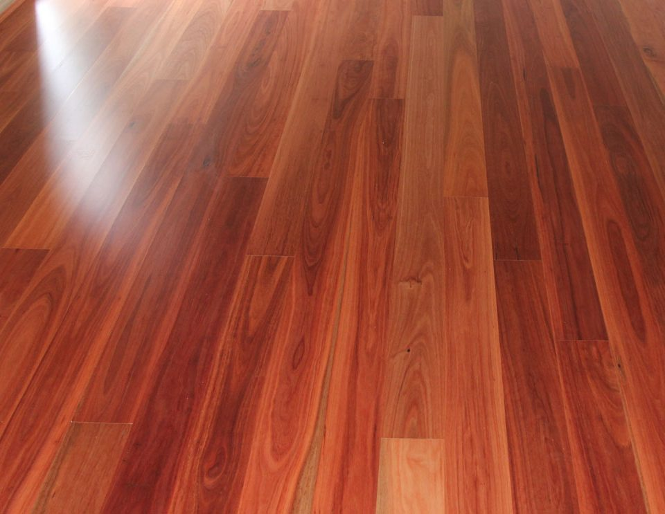 Blue Gum Timber Flooring Sanding And Polishing Staining